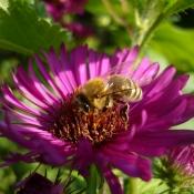EU-Kommission präsentiert Pollinator Park