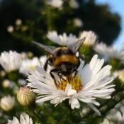 Online-Bienenkonferenz: Let`s bee together!